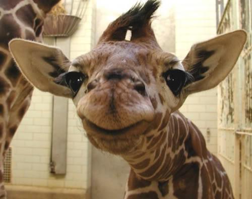 Giraff som profilbilde er ikke farlig!